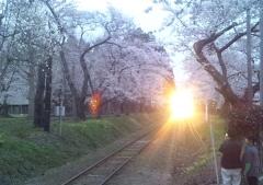 津鉄桜 (1)_600