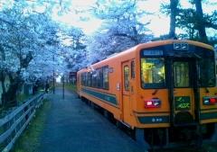 津鉄桜 (3)_600