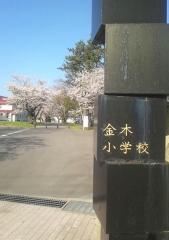 金小桜 (1)_600