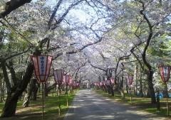 芦野公園4- (2)_600