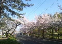 芦野公園4- (4)_600
