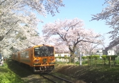 津鉄桜トンネル (3)_600