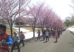 桜並木ノル (5)_600