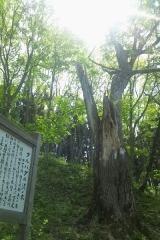平賀歩き (11)_600