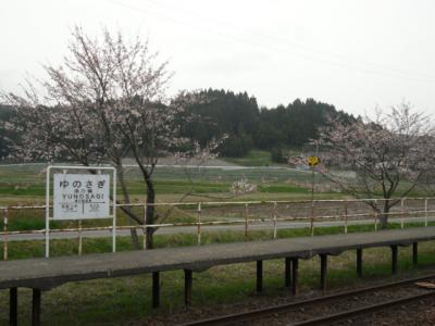 '15sakura04