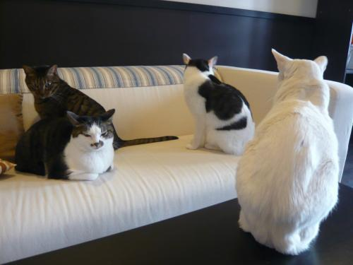 ラーとモアニとマナとレア