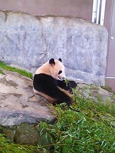 panda_eat1.jpg