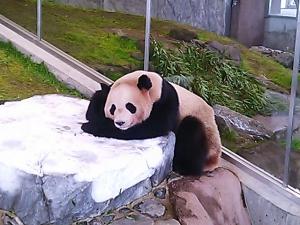 panda_sleep.jpg
