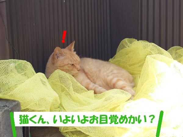 「猫くん、いよいよお目覚めかい?」