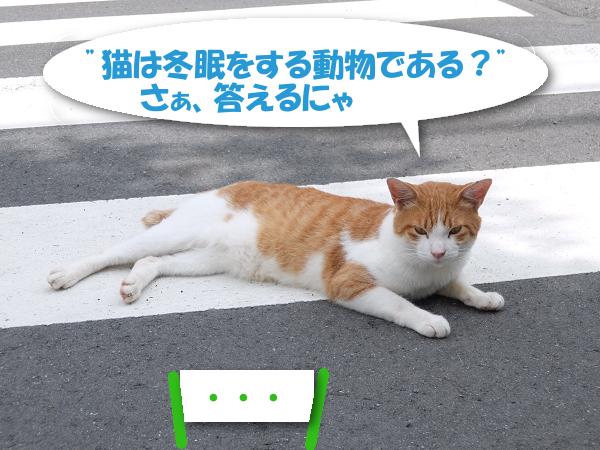 """""""猫は冬眠をする動物である?""""さぁ、答えるにゃ 「・・・」"""