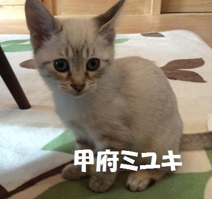 甲府ミユキ