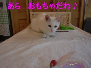 CIMG5556 ①