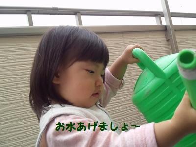 20141020芋収穫④