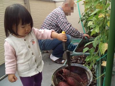20141020芋収穫⑤