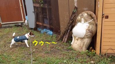 20141129チャイとたぬきの置物①