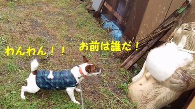 20141129チャイとたぬきの置物②