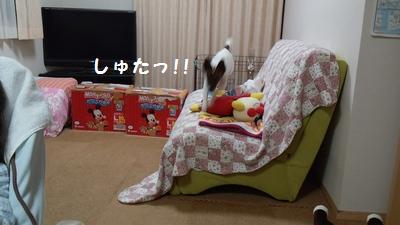 201403チャイ3歳6ヶ月④