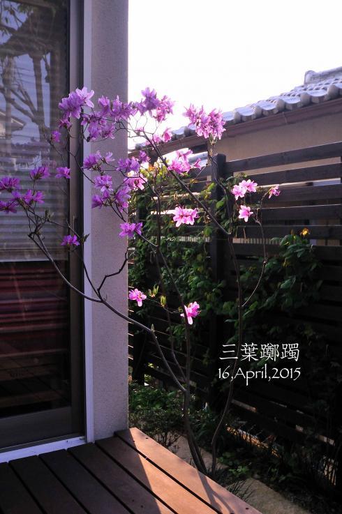 DSC_5801-L_convert_20150416143415.jpg