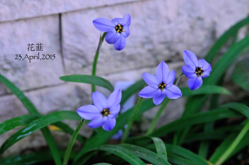 DSC_6180-L_convert_20150428221408.jpg