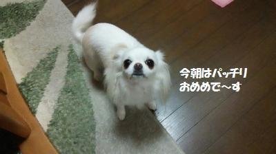 DSC_0177_convert_20150703094450.jpg