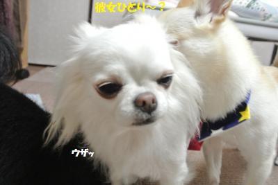 DSC_2691_convert_20150706101413.jpg
