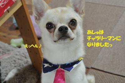 DSC_2696_convert_20150706101519.jpg