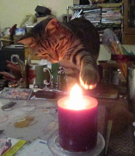 何故火に魅せられるのか