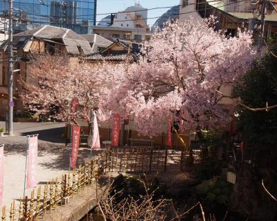 桜(津の守弁財天)
