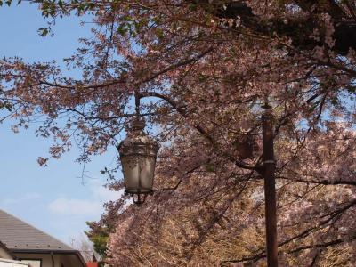 桜(国立2015年)