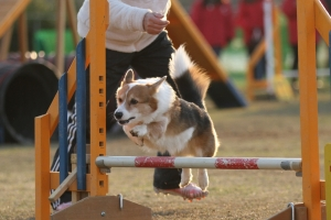 2015hukuyama 35611_R