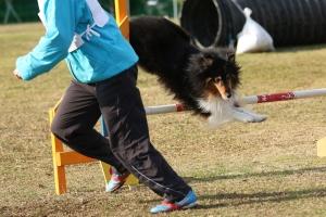 2015hukuyamama 397211_R