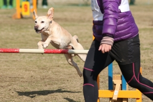 2015hukuyamama 218411_R