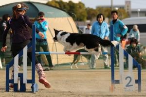 kouchi 392611_R