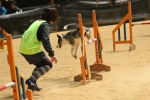 kyoutoc 79411_R