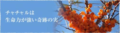 ドクターイエロージャパン チャチャルジュース