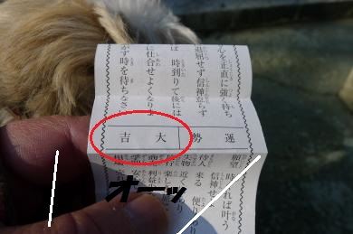 おみくじ2015