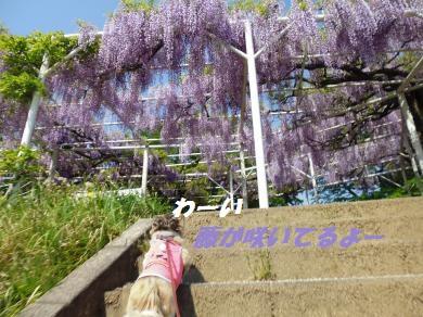 桜淵2015-2