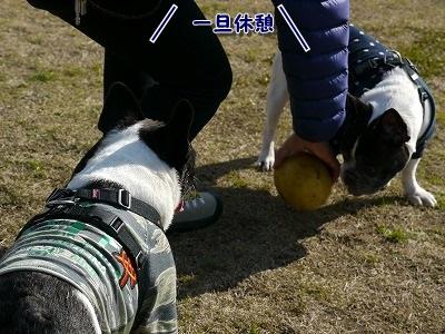 淡路6 (8)