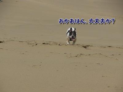 砂丘 (1)