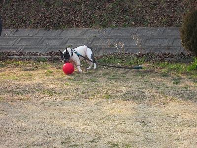 ボール (2)