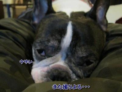 すっぽり (1)