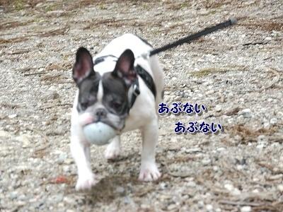 あぶない (6)