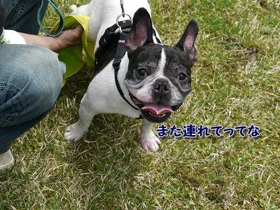 だのしい (5)