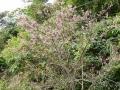 桜DSCN0162