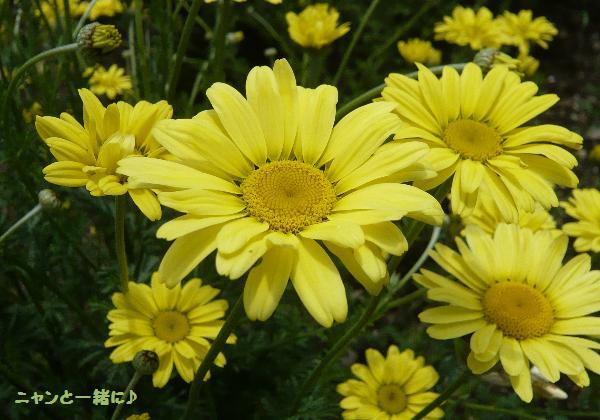 黄色070515