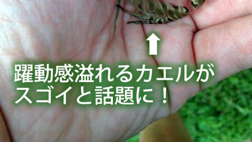 躍動感溢れるカエルがスゴイと話題に