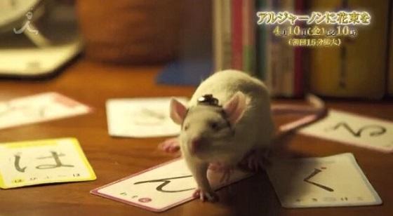 【画像・動画】TBSの新番組『アルジャーノンに花束を』番組宣伝動画に「は・ん・ぐ・る」とサブリミナル 編成・プロデューサー:韓哲