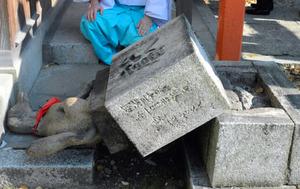 .「おいなりさん」キツネ石像4体破壊 福岡・警固神社
