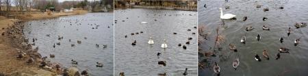 動物15_1_19 羽田沼の鳥達