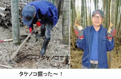 食15_4_4 タケノコ掘り2
